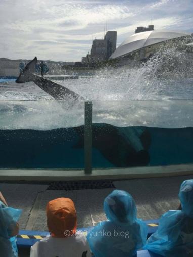 鴨川シーワールドシャチショーの水しぶき