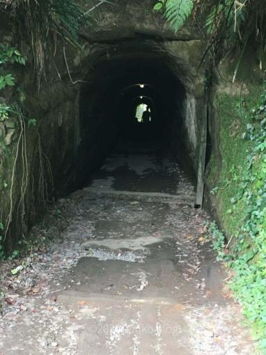 鵜原理想郷ハイキングコースのトンネル