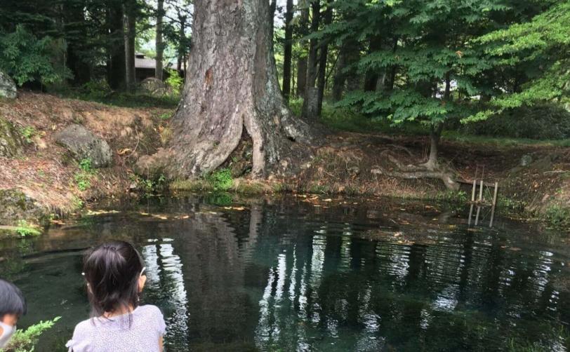 富士山山中湖忍野八海底抜池の風情